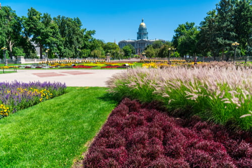 colorado state capitol in the distance with flowers and trees in the foreground capitol hill denver